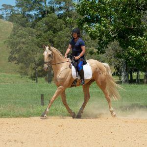 Horse for sale: Striking Palomino Dressage Horse - International Pedigree