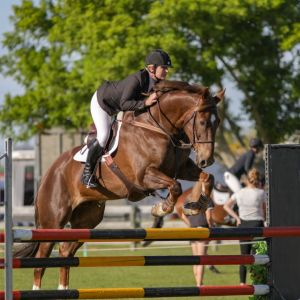 Faieska, 17.2h, 12 yrs old, Gelding