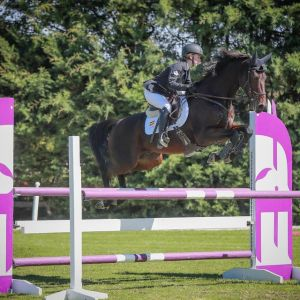 Horse for sale: Junior/Young Rider Horse For Sale