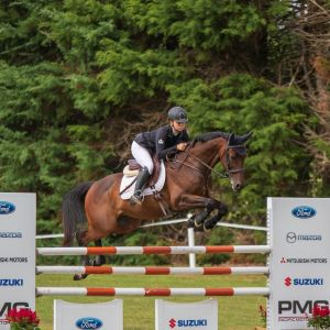 Horse for sale: HORSE FOR SALE: A Dream Show Jumping School Master