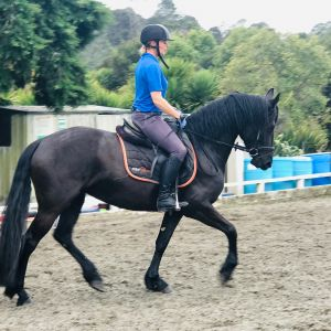 Crystal Mt Crusada -  Friesian Sporthorse