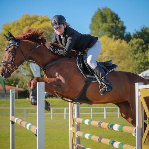 Horse for sale: Kiwi Mildee - Competitive Junior Rider Mount