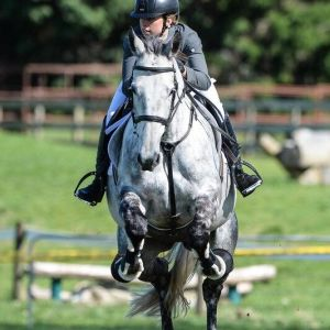 Horse for sale: Potential Junior/Young Rider mount