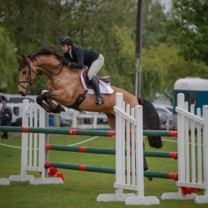 HORSE FOR SALE - Perfect Amateur/ Junior Rider Horse