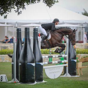 Horse for sale: Stunning Dutch Warmblood