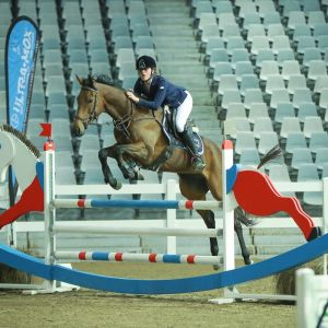 Horse for sale: TALENTED THOROUGHBRED