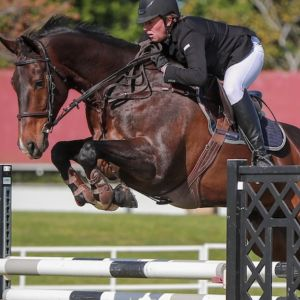 Horse for sale: Carino NZPH -7 Year Old Super Talented Showjumper