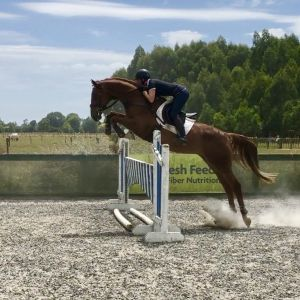 Horse for sale: Exceptionally Talented Mare