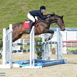Horse for sale: Showjumping Schoolmaster