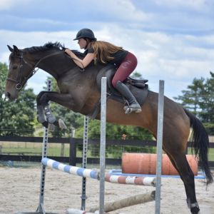 Horse for sale: The Labyrinth - Super Talented 6yr Old