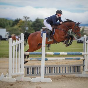 Horse for sale: Superb Upcoming Show Jumper - Jay Z - GNZ