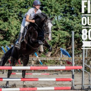 Horse for sale: High Performance Holsteiner Warmblood by Cassini D'Eclipse