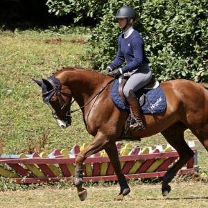 Horse for sale: Multi-disciplined schoolmaster