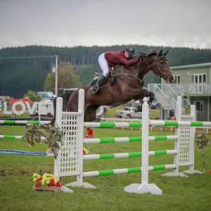 Horse for sale: SE Rumour Has It - YR/JR/AMR/GP