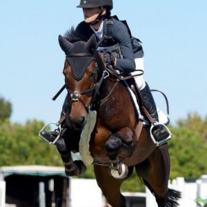 Horse for sale: Superb All Rounder