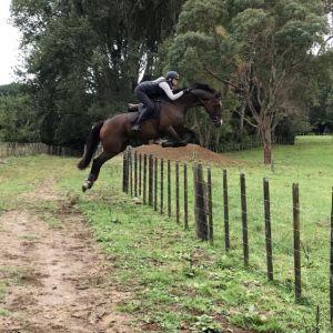 Horse for sale: Hunter/Show Jumper/Eventer