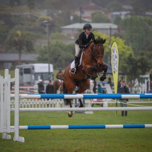 Awesome competitive showjumper