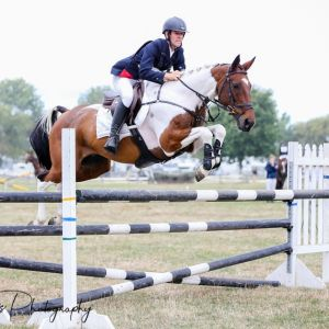 Horse for sale: Awesome and Fun Little Allrounder