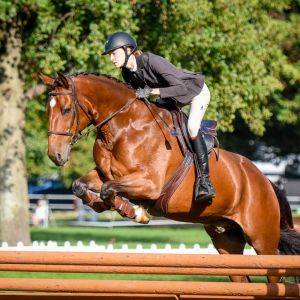 Show Hunter/Show Jumper For Sale