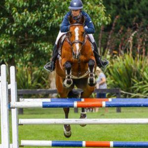 Horse for sale: Super Classy Mare