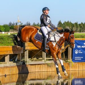 Horse for sale: Exceptional Pony Club Eventing Mount