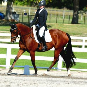 HORSE FOR SALE - DRESSAGE STAR/EVENTER