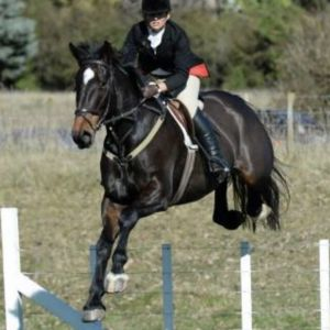Horse for sale: Dressage or Hunter - A fun gental giant
