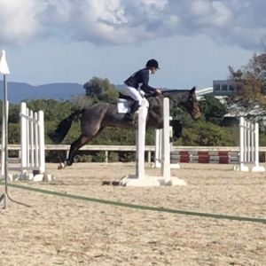 Horse for sale: Super quiet/sane stationbred all rounder