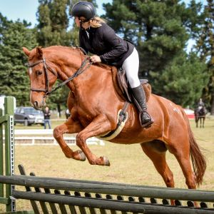 Horse for sale: Fun All Rounder