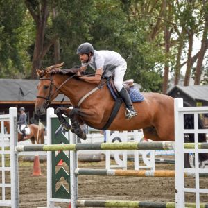 Quality Show Jumping Mare for Pro Am or Professional Rider