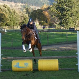 Horse for sale: Gorgeous Gelding For Any Dicipline.