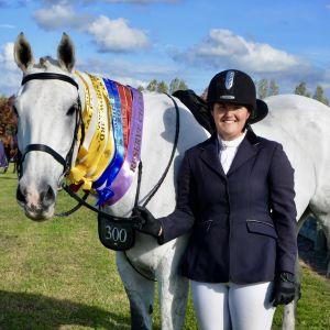 Horse for sale: Multi-Disciplined Outstanding Schoolmaster