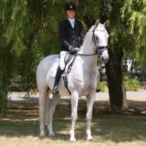 Multi-Disciplined Outstanding Holsteiner Schoolmaster