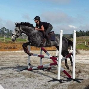Horse for sale: **Eye catching young horse with an exciting future**