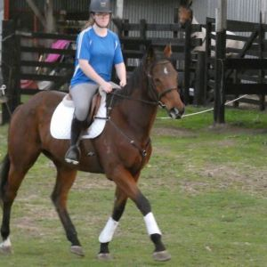 Horse for sale: Cute project