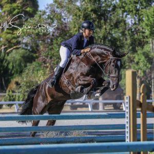 Horse for sale: Stunning black allrounder