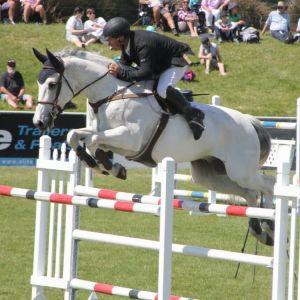 Horse for sale: Glenbrooke Archie Bunker