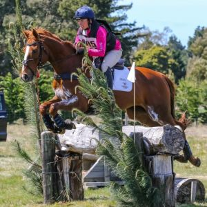 Horse for sale: Horse For Sale - Fabulous safe and quiet, successful 2 Star Eventer