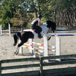 Horse for sale: Fun Allrounder!