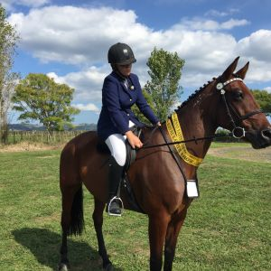 Horse for sale: Adult Returning to Riding /Confident Beginner Horse