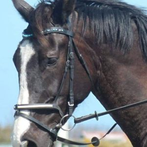 Horse for sale: Rising 6yr old 171cm gelding by Eurosport Centavos