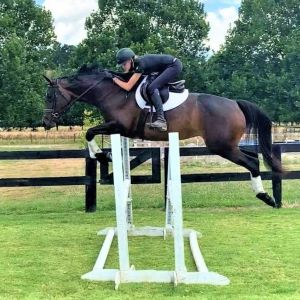 Horse for sale: Must Sell - Will consider Offers over 10k   - Stunning Allrounder