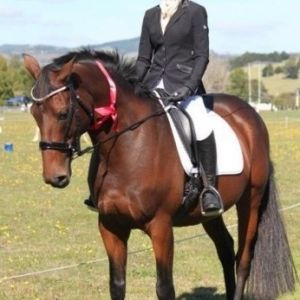 Horse for sale: Outstanding Dressage Horse