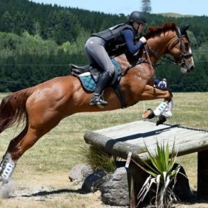 Horse For Sale - Stunning Eventer