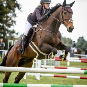 Horse for sale: Super young Show Jumper and Hunter