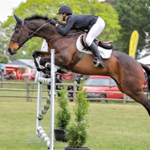 Genuine and Competitive Showjumping Schoolmaster