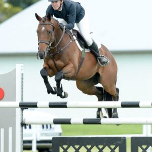 Talented jumping Horse