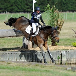 Horse for sale: Experienced 4* Eventer