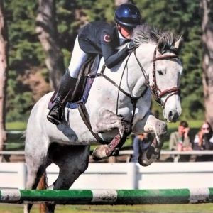 Horse for sale: Exceptional Young Horse