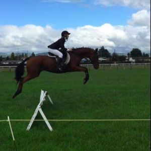 Horse for sale: Super Cool Alrounder